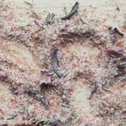 Tomātu - Sīpolu sāls